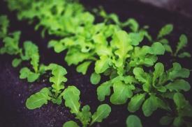 food-salad-healthy-vegetables