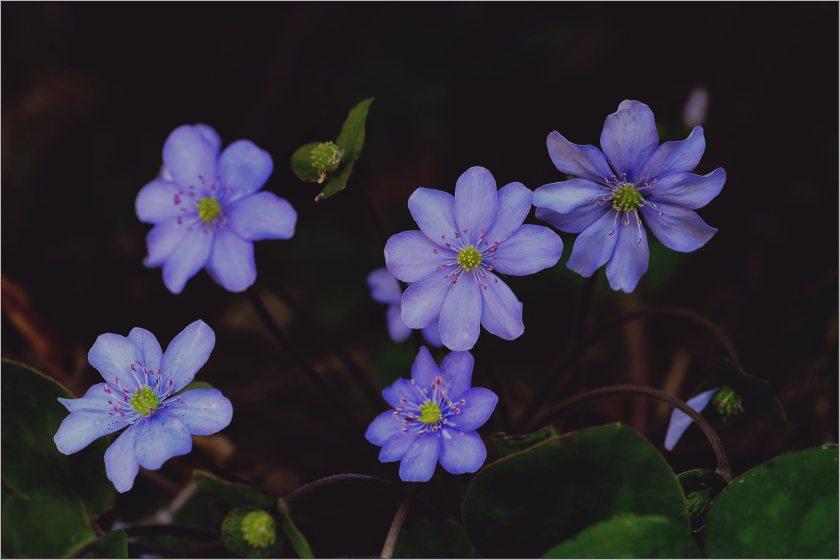 beautiful-bloom-blooming-949372