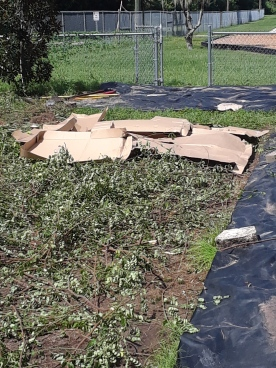 Cardboard is an inexpensive weed barrier.